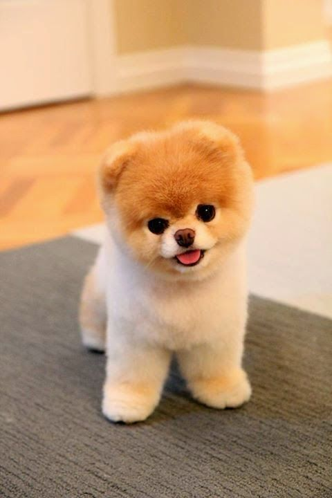 80d364e09d31fcba8af274926d4332ff-cute-puppy-pictures-with-sayings-puppies-images-to-print-for-free.jpg